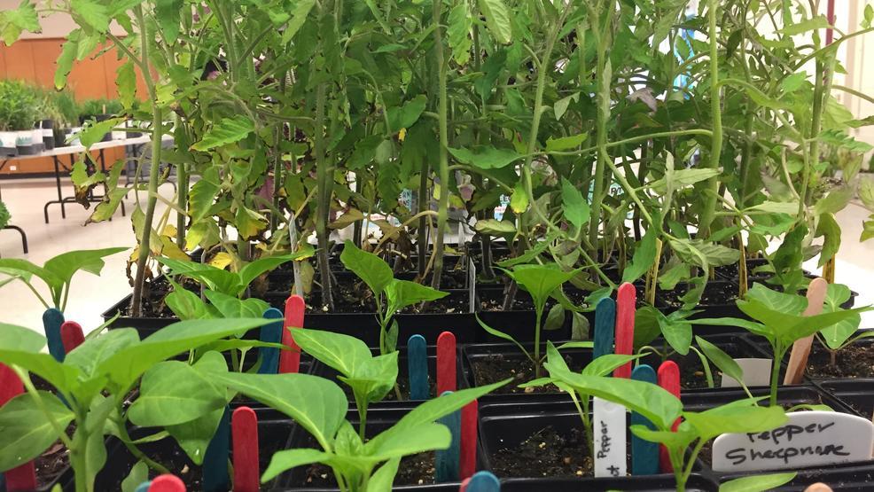 Master Gardeners 39 Plant Sale Is Back In Bellevue Wluk