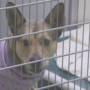 Greater Androscoggin Humane Society responds to euthanasia allegations