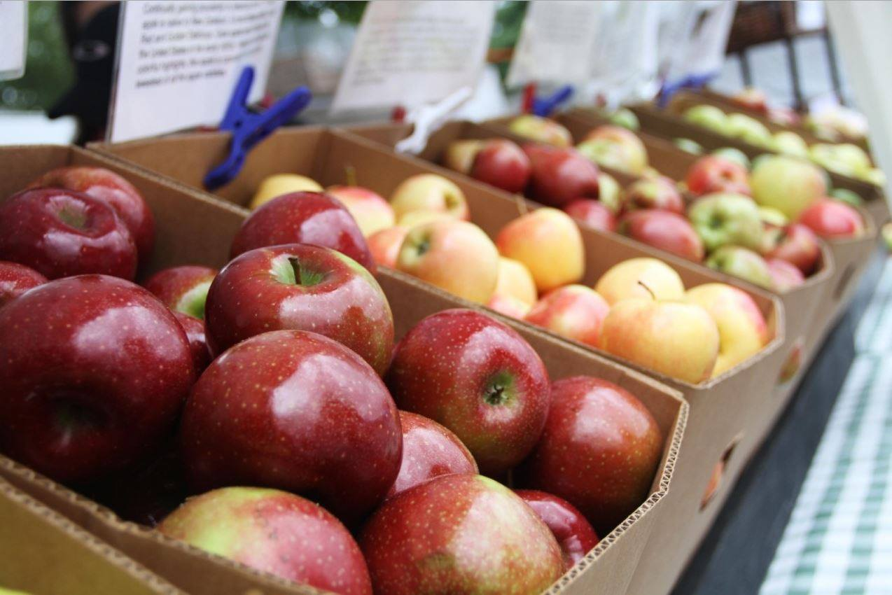 "News 13 will accept donations at the North Carolina Apple Festival Friday only for our <a href=""http://wlos.com/features/sinclair-cares/wlos-to-hold-standing-strong-for-texas-fundraiser-friday-at-nc-apple-festival"" target=""_blank"">Standing Strong for Texas Hurricane Harvey relief fundraiser</a>. Look for our truck on 2nd Avenue West! (Photo of the 2016 Apple Festival: WLOS staff)"