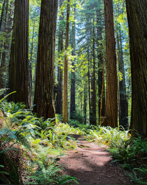 Redwood National Park (Photo: Instagram| beermountaineer)