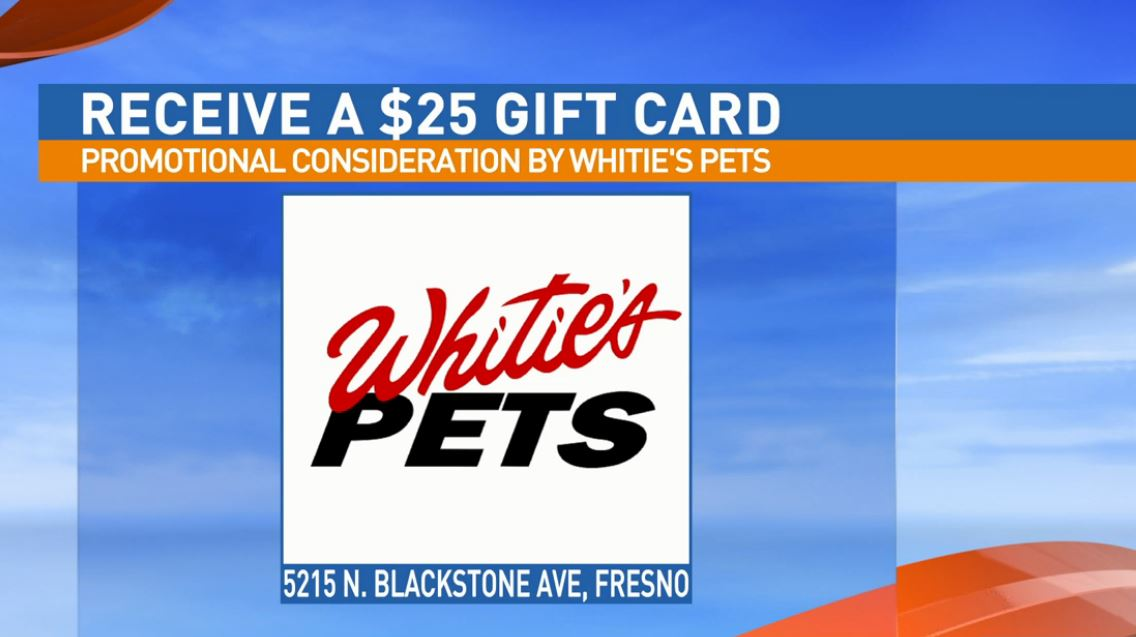 Get a $25 gift certificate to Whitie's Pets for adopting Dipper