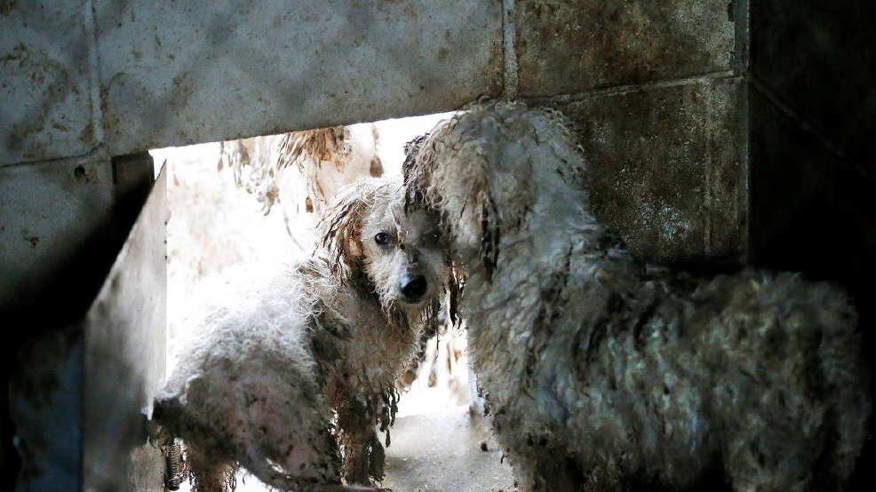 Hundreds Of Dogs Rescued From Puppy Mill
