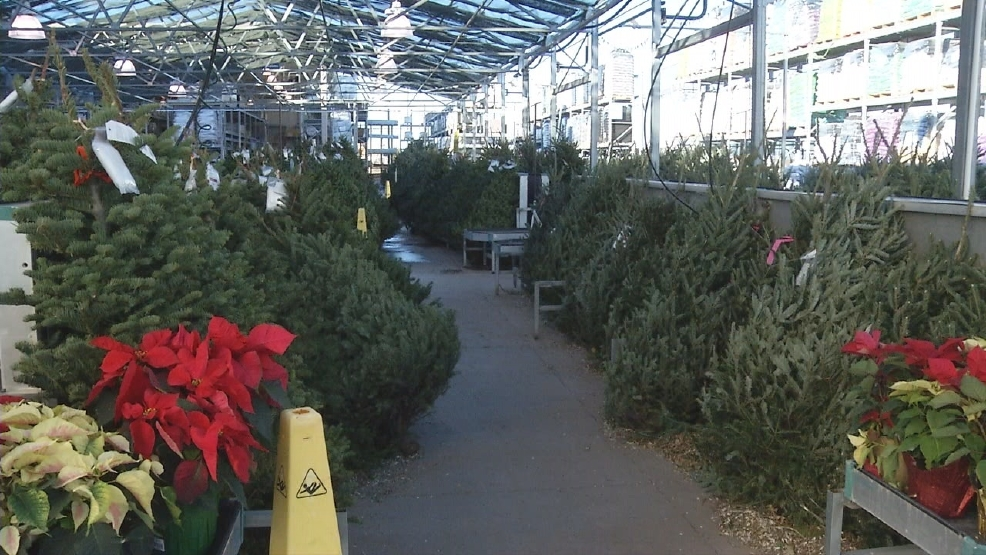 lowes begins christmas tree sales for holiday season - Lowes Christmas Trees