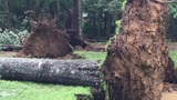 Trees down on Signal Mountain after thunderstorm Tuesday night