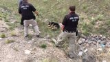 German Shepherd rescued from drainage pipe