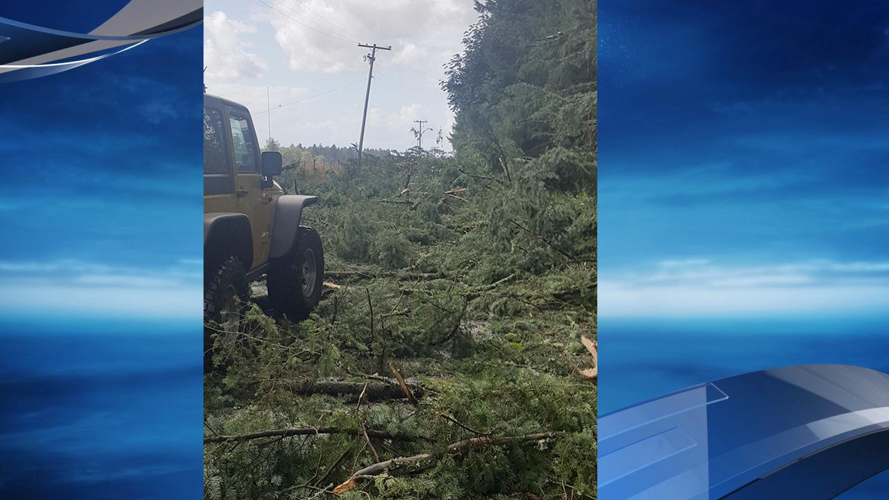 KATU viewer Pat Hulburt sent in this photo of storm damage in Lacomb, Oregon, which is northeast of Lebanon.