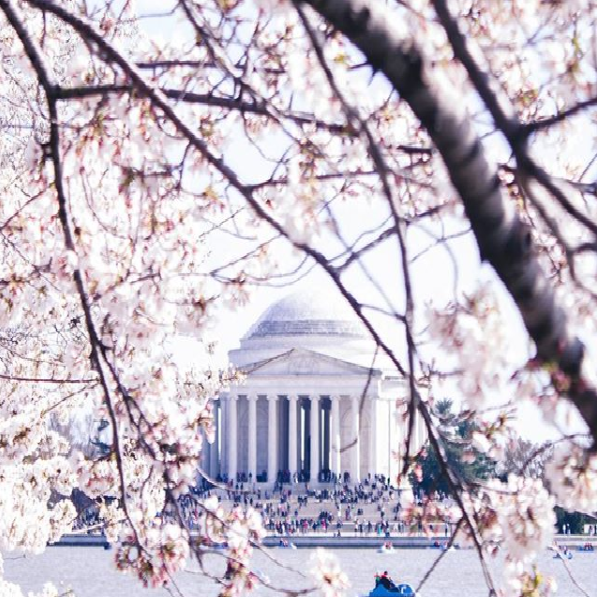 The hashtag isn't just unique goods though. Like many popular hashtags on Instagram, #madeindc features some gorgeous images of The District, like this one. (Image via @hholas)