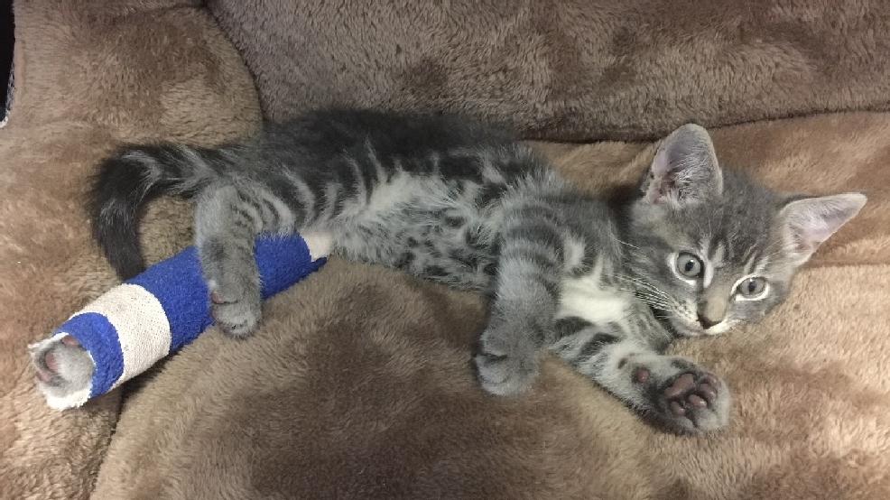 cat found in car muffler in jacksonville wcti. Black Bedroom Furniture Sets. Home Design Ideas