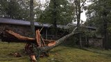 Gallery: Irma's leftovers topple trees on Signal Mountain early Tuesday