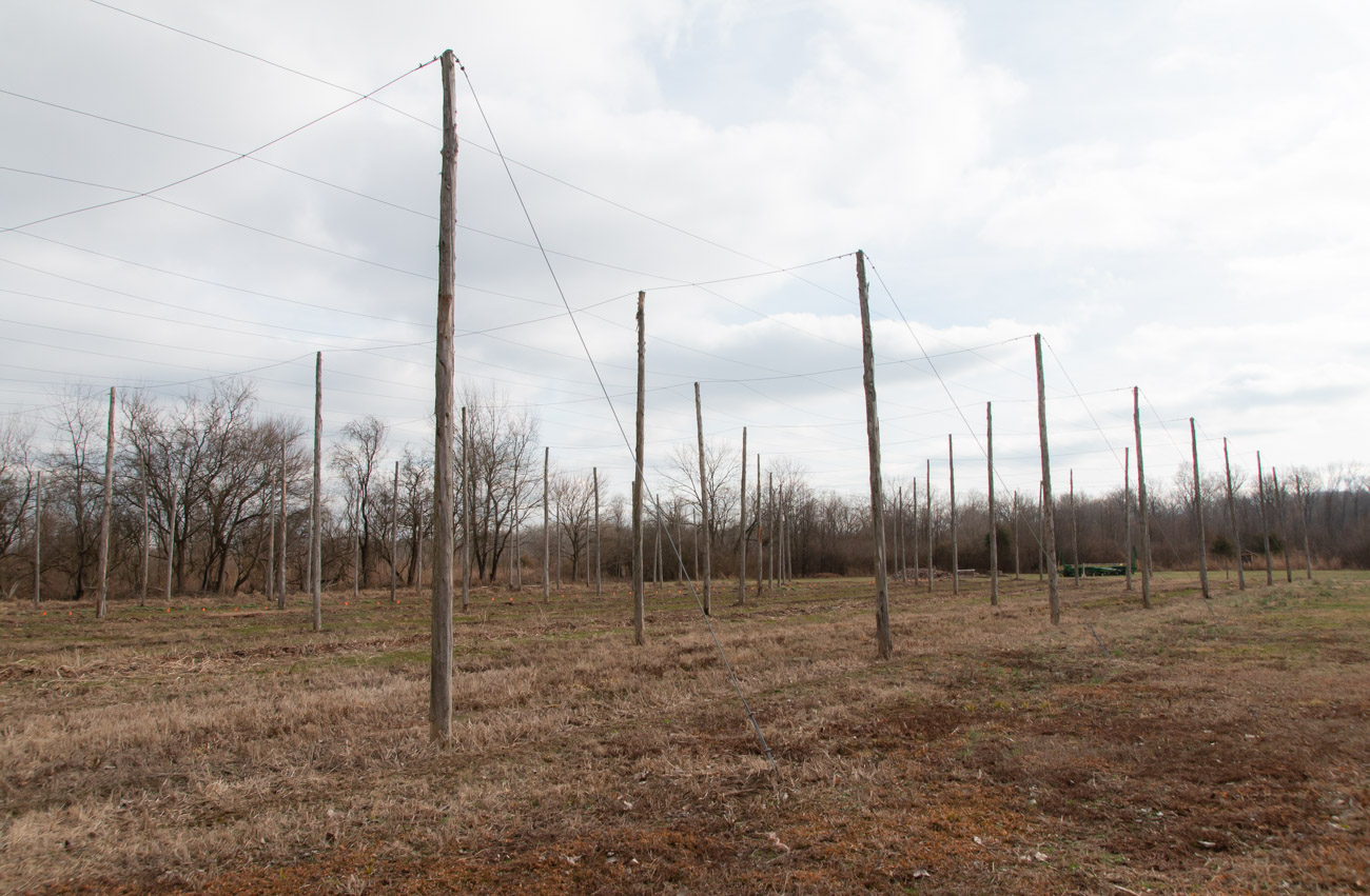 In 2013, volunteers constructed a one-acre hops yard—one of the largest in Ohio. In 2014, more than 800 hop varieties were planted with all proceeds from sales going to benefit the foundation. In 2016, Taft's Ale House used their hops to brew 50 barrels of their Hail to the Harvest beer. / Image: Vanessa Hannah // Published: 2.25.20