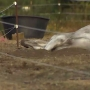 Sick horse lying in open field upsets neighbors in Thurston County