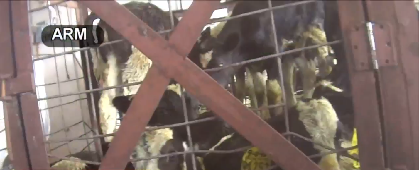 CBS12 News Investigates: Inside the secret compound of Animal Rescue Mission (ARM){ }