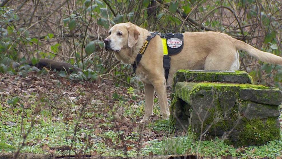 Cadaver Dogs Do Critical And Emotionally Taxing Work Katu