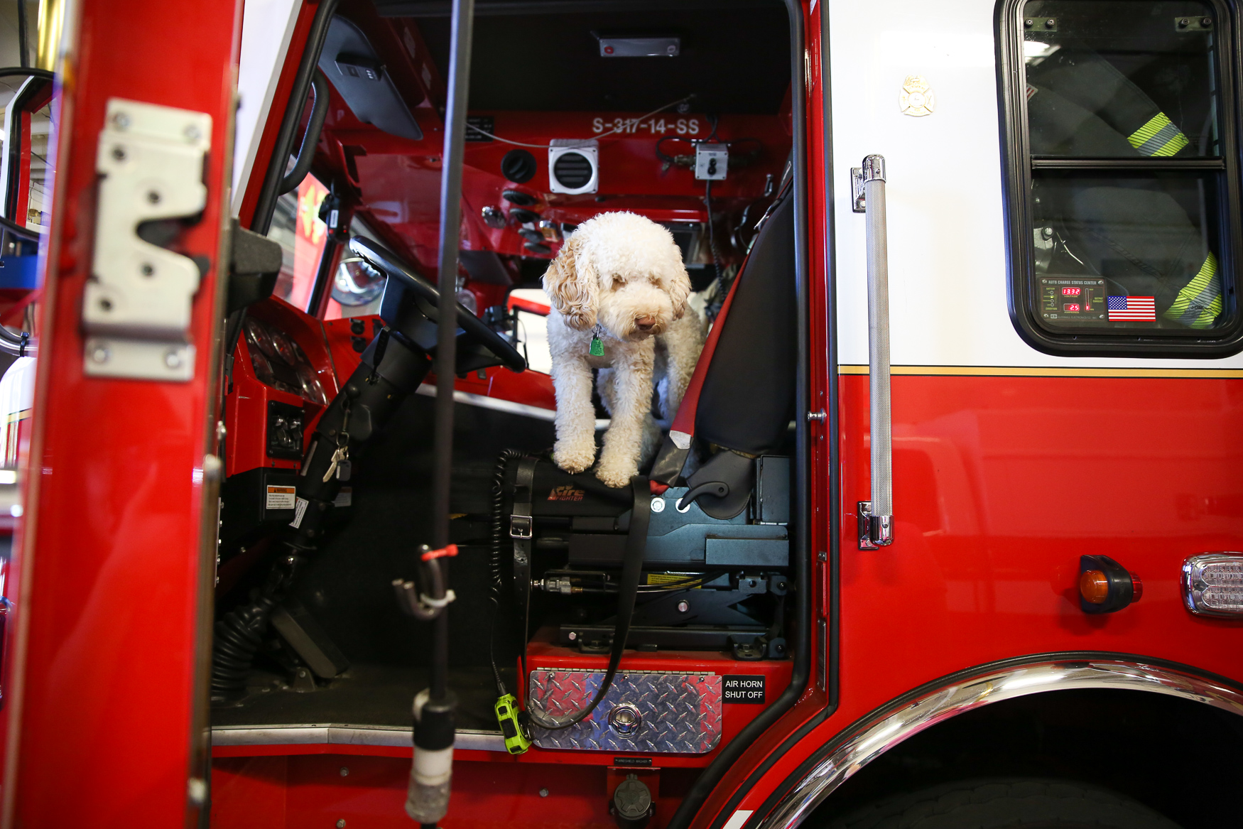 Zucca, a miniature Australian labradoodle who is just over a year old, stopped by at Engine Company 11 in Columbia Heights. He enjoyed having a ball thrown around by firefighters and EMS workers in the fire house. (Amanda Andrade-Rhoades/DC Refined)
