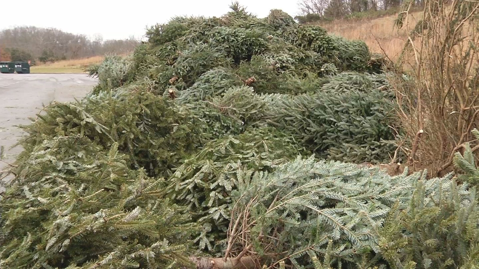 recycle your old christmas tree - What To Do With Old Christmas Trees