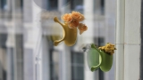 PHOTOS: Quirky suction cup planters let you grow a garden on your window