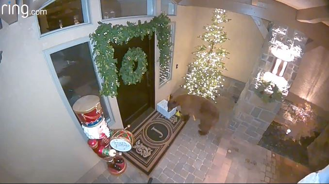 Bear caught on camera stealing a package from a porch in Reno. (RING)