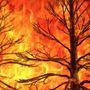 Tennessee wildfire season starts Sunday