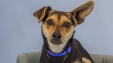 Photos: 9 adoptable pets from Woodinville Homeward Pet