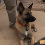K-9 unit removed from former Camp Point police chief