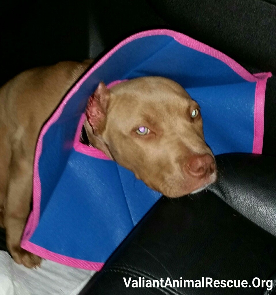 Breast Reduction Dog Ears
