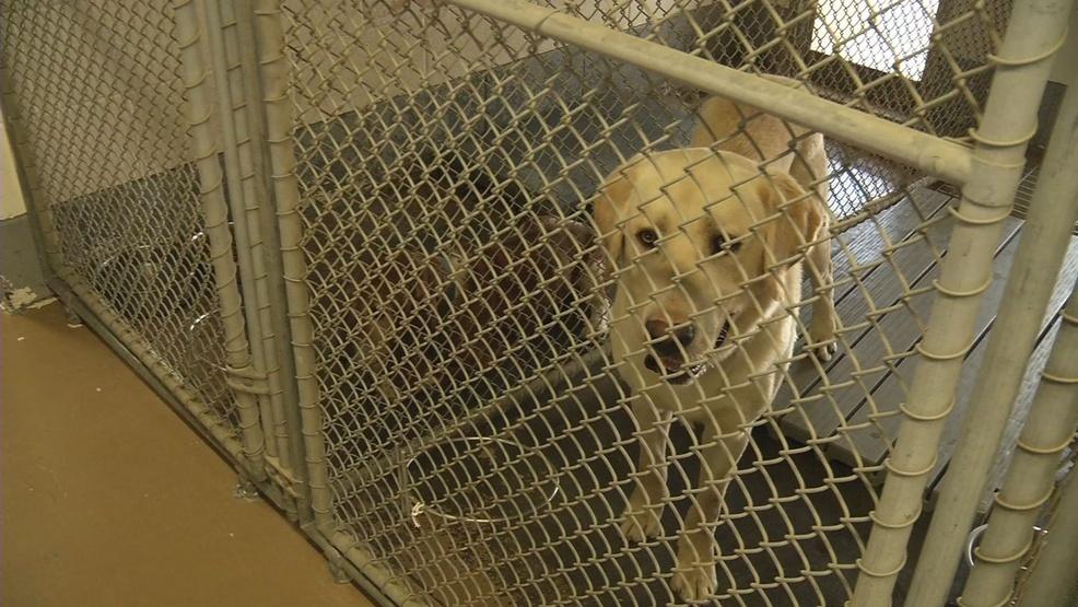Free pet adoption day   WCYB