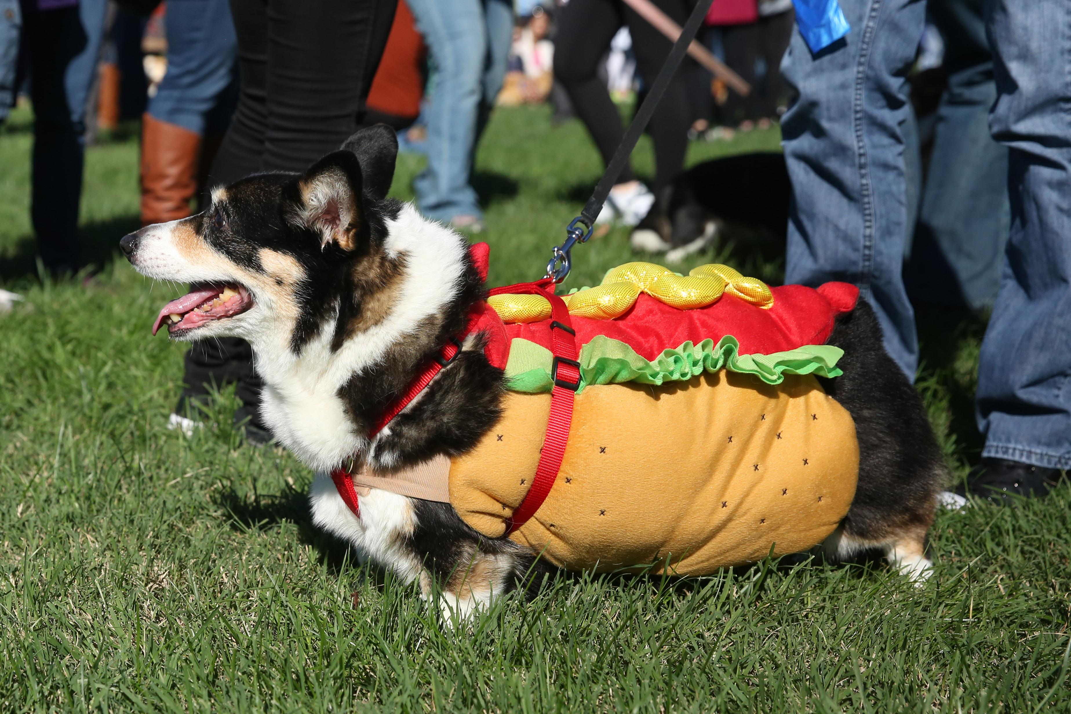 Hot dog!{ }(Amanda Andrade-Rhoades/DC Refined)