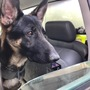 A four-legged officer joins animal control