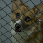 Lenawee County Humane Society has nearly housed every puppy mill rescue
