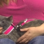Kristin the kitten needs a loving home!
